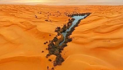 Технология выращивания лесов при помощи энергии солнца и морской воды позволит озеленить Сахару