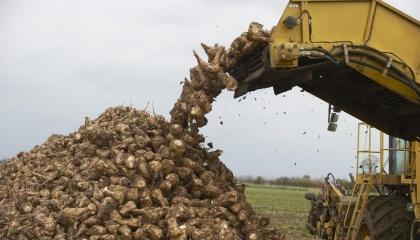 В 2016 г. Украина получит рекордный объем экспорта сахара, а в 2017 г. производители будут стремиться наращивать производственные мощности, вместе с которыми будут расти количественные и качественные показатели производства сахарной свеклы