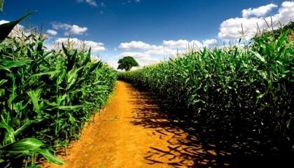 Произойдет небольшое и стабильное увеличение производства зерновых (в основном, кукурузы и пшеницы), увеличение производства подсолнечника и сои