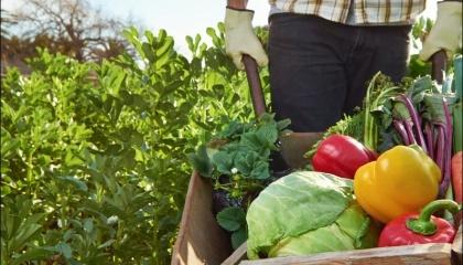 В ВРУ зарегистрирован проект Закона «О внесении изменений в Налоговый кодекс Украины и некоторые законодательные акты Украины относительно стимулирования создания и деятельности семейных фермерских хозяйств»