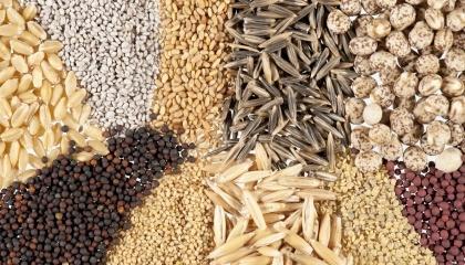 Еврокомиссия возобновила работу в направлении признания эквивалентности украинской системы официального контроля и сертификации семян требованиям ЕC