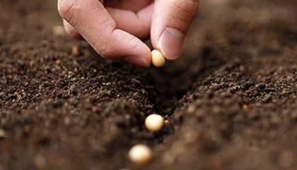 Кабмин утвердил механизм осуществления мероприятий государственного контроля в сфере семеноводства