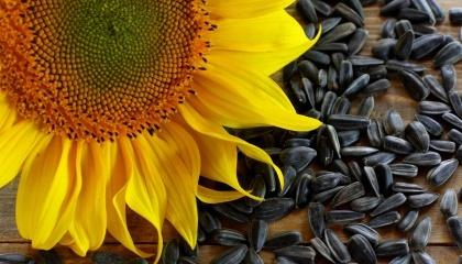 В следующем году компания DuPont Pioneer в Украине планирует обеспечить треть своих продаж семенного материала подсолнечником, выращенным в Украине