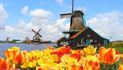 Нидерланды являются мировым лидером по выращиванию и экспорту цветов