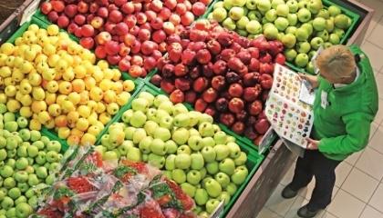 У грудні сталася знакова подія для галузі садівництва: вперше в її історії відбулася поставка продукції до Швеції, яка славиться дуже вибагливим споживачем