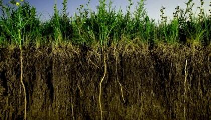 Идея сидератов - это защита почв от эрозии, улучшение жизнедеятельности живых организмов почвы, оптимизация структуры почв, внесение в них органической массы