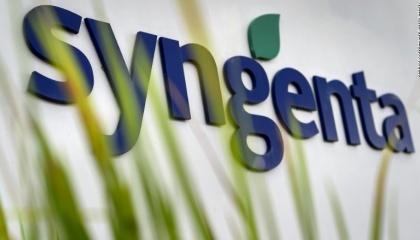 В этом году до 90% семян кукурузы Syngenta - местного производства. А вот по подсолнечнику - 70% импортного посевного материала