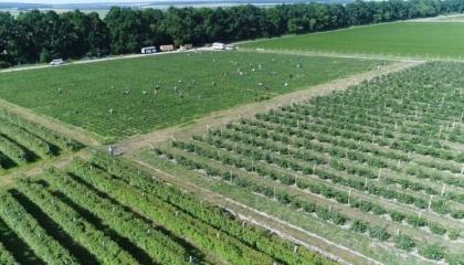 Село Снітків Вінницької області за останні 2-3 роки перетворилося на потужний осередок ягідного та фруктового виробництва та переробки, створивши понад 200 робочих місць