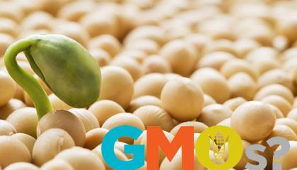 В Украине активно выращиваются ГМО-культуры. Абсолютно никакого контроля за выращиванием ГМО-сои не осуществляется, хотя полученная по такой технологии продукция, согласно закону, подлежит полному уничтожению