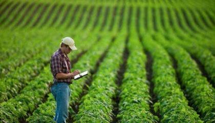 Многолетние наблюдения показали, что плотность посева сои нужно увеличивать, а ширину междурядий - наоборот, уменьшать