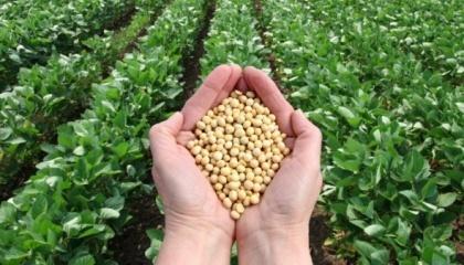 Производство сои в Аргентине оказало значительное вредное воздействие на окружающую среду, поставив под вопрос ее долгосрочную устойчивость