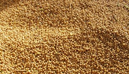 Під час розслідування кримінального провадження за ч. 1 ст. 205 - фіктивне підприємництво ККУ, була встановлена група осіб, яка мала намір експортувати понад 800 т сої за допомогою фіктивного підприємства