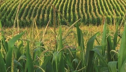 Підвищення температури повітря в першій декаді червня при дефіциті або відсутності опадів, наявність суховіїв обумовлювали подальший розвиток посушливих явищ