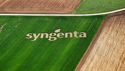 У Syngenta в Україні відзначають: фермери стали частіше звертати увагу на продукти-аналоги або генеричні продукти, завезені з південно-східних країн - Китаю, Індії, Бангладеш