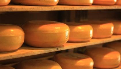 Подальше збільшення цін на сир стає недоцільним. Не виключено, що скоро знову доведеться вдаватися до акційних розпродажів залежаного продукту