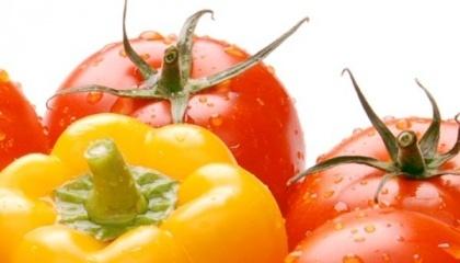 По мнению трейдеров, наибольший экспортный потенциал в 2017 г. имеют тепличные овощи, а именно огурцы, томаты и перец