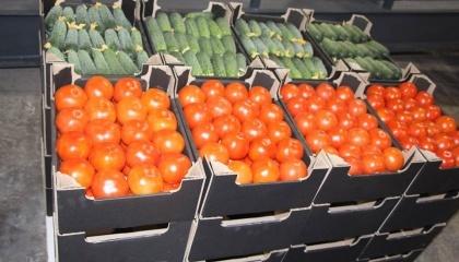 В селе Водяное Каменско-Днепровского района Запорожской области открыли первую в Украине станцию послеуборочной доработки томатов