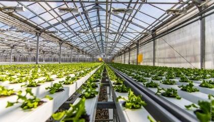 Рентабельность тепличного бизнеса в Украине не превышает 10%, а экспортируется примерно 20% от всей производимой продукции