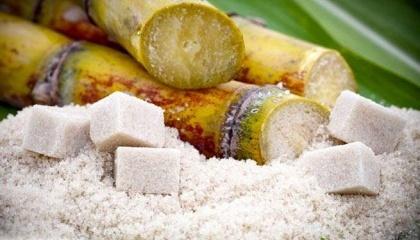 Бразилія схвалила генетично модифіковану цукрову тростина для комерційного використання