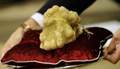 В Італії ціни на білі трюфелі побили черговий історичний рекорд, досягнувши 6000 євро/кг