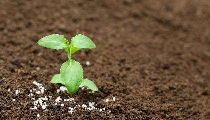 """ПАТ """"Аграрний фонд"""" закупило у підприємств компанії Ostchem Дмитра Фірташа близько 258 тис. т мінеральних добрив на суму 1,6 млрд грн"""