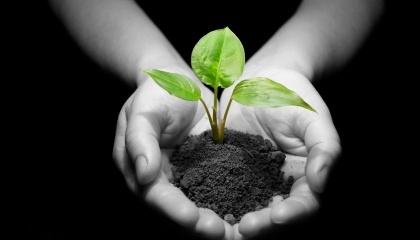 Амідна форма азоту - енергетично найбільш вигідна для рослини. На другому місці за ефективністю - амонійна форма азоту, а на третьому - азотна
