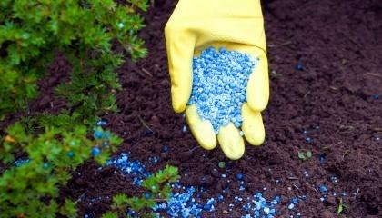 Украинский рынок удобрений должен был вступить в фазу переформатирования
