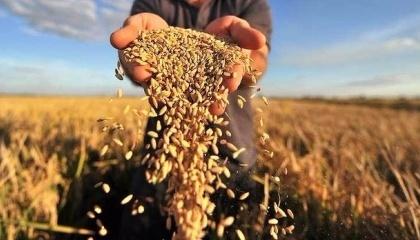 В странах Европейского Союза ожидают незначительное снижение среднего показателя урожайности зерновых и масличных культур