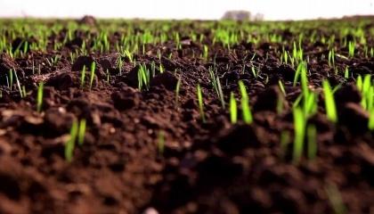 На тлі підвищеного температурного режиму на території України в кінці лютого - початку березня, розпочалося відновлення вегетації озимих культур, що на 15-18 днів раніше звичайних строків