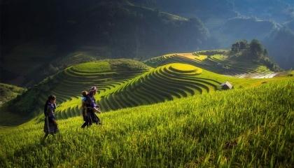 За останні п'ять років В'єтнам щорічно витрачав близько $500 млн на імпорт пестицидів і матеріалів з Китаю