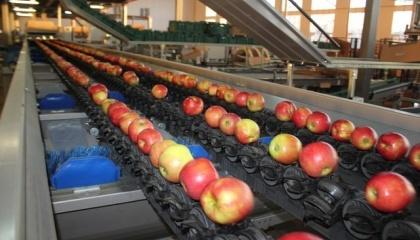Фруктові сади розташовані майже на 600 га землі. Крім яблук, у садах вирощують груші, сливу, черешню. В цьому році зібрали урожай фундука