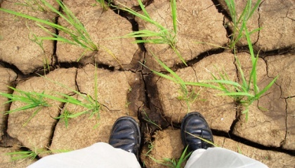 Оцінку ефективності використання води в сільському господарстві можна здійснювати високотехнологічними методами за допомогою нового інструменту - бази даних WaPOR, розробленого FAO