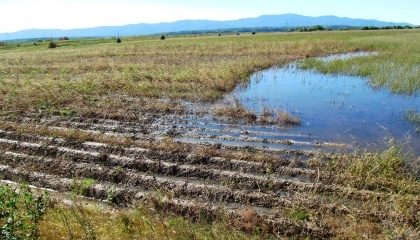 На Київщині, Одещині та Херсонщині місцями спостерігається вимокання озимини внаслідок тривалого затоплення талими водами
