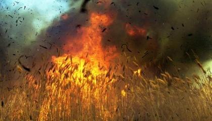 Щороку в Україні значну кількість гектарів зернових нищать пожежі, причинами виникнення яких є необережне поводження з вогнем, порушення правил експлуатації машин та агрегатів, несправність зернозбиральної техніки, підпали, а також випалювання стерні