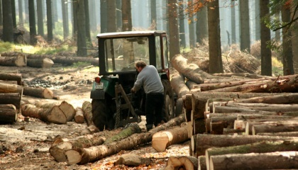 vurybka lesov