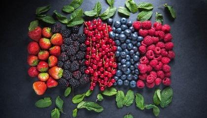 Обсяг міжнародної торгівлі свіжою полуницею поступово скорочується на користь інших ягід. Частку полуниці на глобальному ринку «твердих» і «м'яких» ягід відвойовують малина і лохина