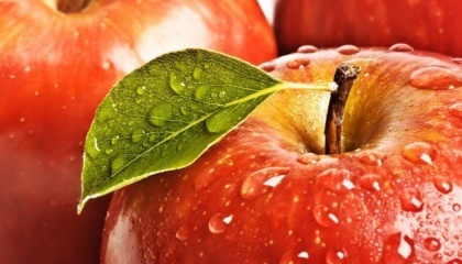 У 2016 році садівники Вінницької області зібрали 310 тис. т яблук, що дозволило регіону утримати за собою лідерство за обсягами виробництва цих фруктів в країні.