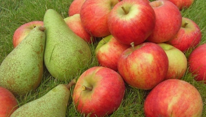 Доходность с 1 га яблони составляет около 500 тыс. грн, из груши - от 1 млн грн