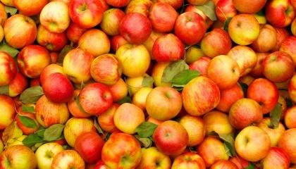 Яблука в Україні продовжать дорожчати на 10-15% через те, що товар вже починає закінчуватися. При цьому, імпортні яблука будуть додавати в ціні в середньому 5-10% на місяць, українські - щомісяця на 10-15%