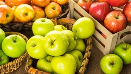 Украина в текущем сезоне продолжает сокращать экспорт и импорт яблок