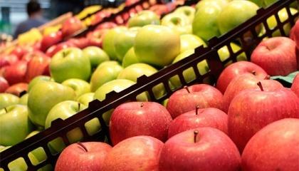 Голден Делішес, Гала, Айдаред, Ред Делішес, Дожнаголд, Джонагоред, Чемпіон – найбільш популярні сорти яблук в 2016 в Європі