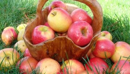 Через весняні заморозки, бурю, град  виробництво фруктів в Угорщині скоротилося на 250-300 тис. т - до 750-800 тис. т
