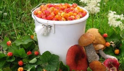Громадяни Білорусі можуть вільно перебувати в лісі і збирати гриби та ягоди. А ось юридичній особі потрібно написати заяву і отримати лісовий квиток на збір