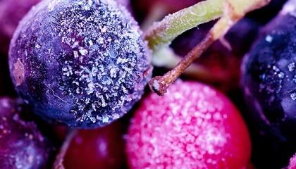 Скорость охлаждения прямо пропорционально влияет на длительность жизни ягоды. Если, к примеру, землянику садовую охладить до +4˚С в течение 6 часов, то она будет свежей 10 дней, а если в течение 3 часов - 14 дней