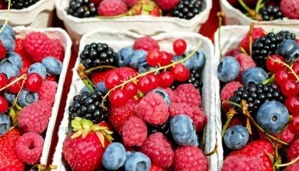 За первое полугодие 2017-го экспорт этих видов ягод составил $5,4 млн, что в 2,16 раза превышает показатели аналогичного периода 2016-го ($2,5 млн). Эти показатели превышают пятилетние в 10 раз ($533 тыс.)