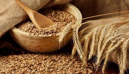 Господарства, які вирощують злакові та олійні культури без єдиних хімічних добрив, практично повністю працюють на експорт - продається 99% сільгосппродукції