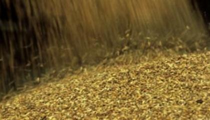 Ціни на агросировини залишатимуться стабільно низькими. Це означає, що прибуток українських фермерів може скоротитися вже за підсумками 2016 року