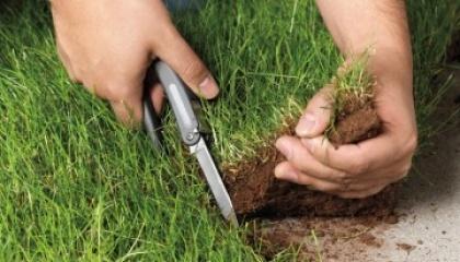 Захоплені земельні ділянки відносяться до особливо цінних земель та перебувають в оренді іншого сільськогосподарського підприємства