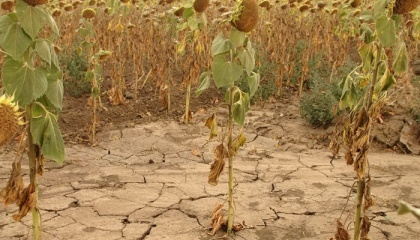 Зараз мова йде не про те, чи прийде посуха, питання треба ставити по-іншому: посуха прийде, і тому ми повинні бути до неї готові