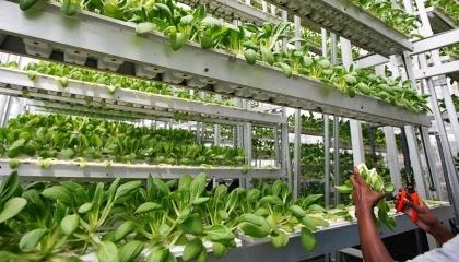 Вертикальное, закрытое фермерское хозяйство Plenty из Сан-Франциско выращивает в 350 раз больше продукции, чем поля или теплицы, используя лишь 1% воды